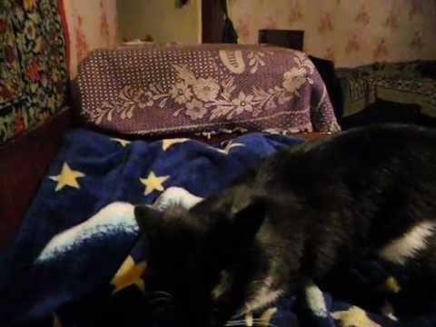 battle cat -