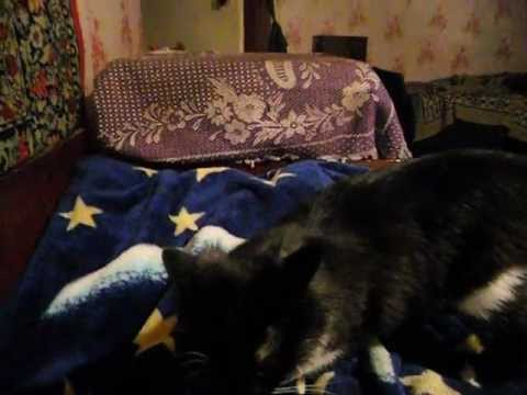 battle cat -